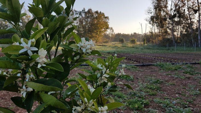 Bed & Breakfast Pintadera - Orto